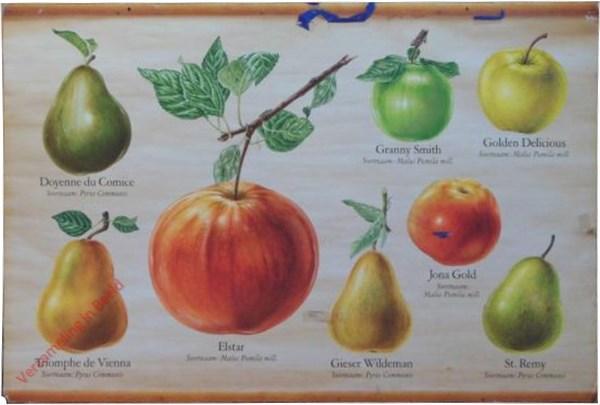 [Grootfruit, Appels en peren]